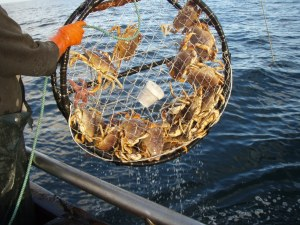 Dungeness crab health advisory lifted for Central Coast